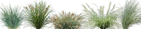 Native Grasses 3D Graphics Preview Image