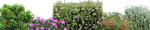 Native Shrubs and Groundcovers 3D Graphics Preview Image