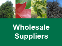 Where to Buy Advanced Trees - Wholesale