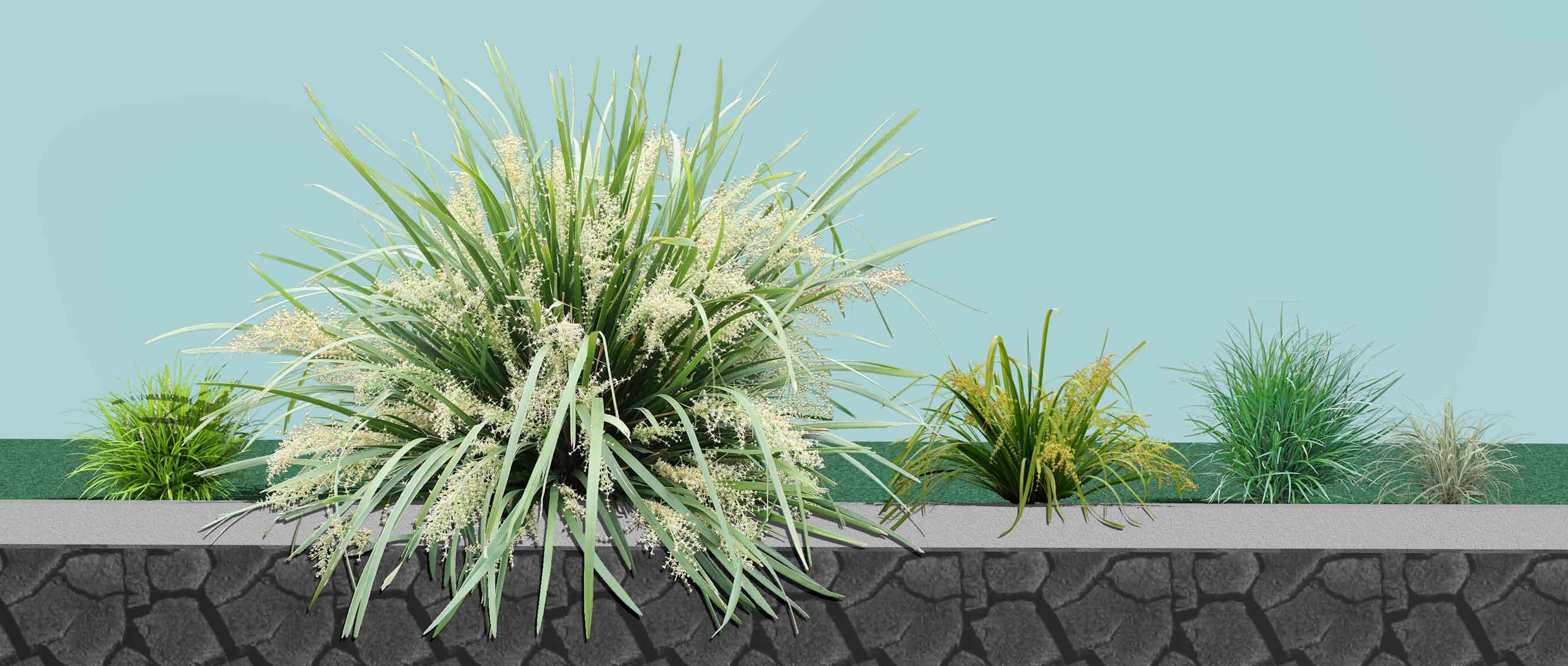 Shade Plants for SA Group Plantings