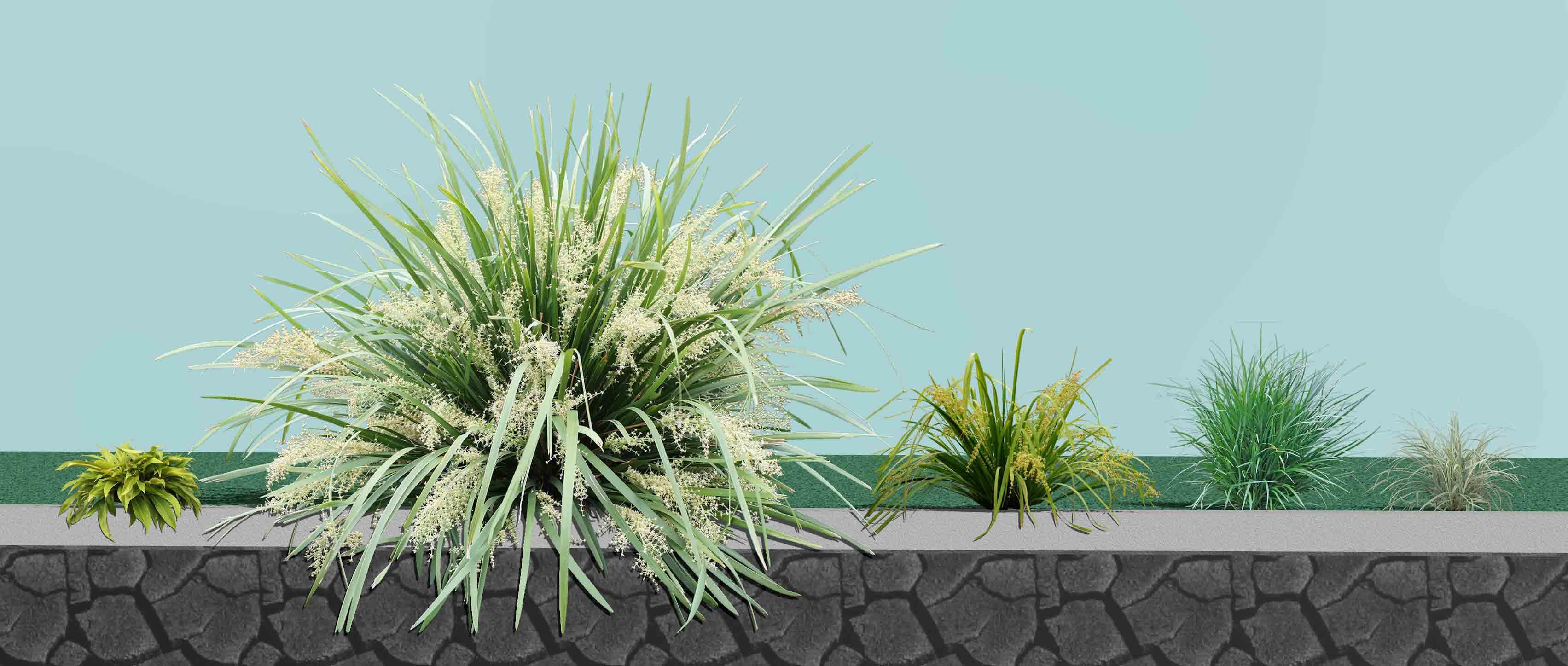 Shade Plants for NSW Group Plantings