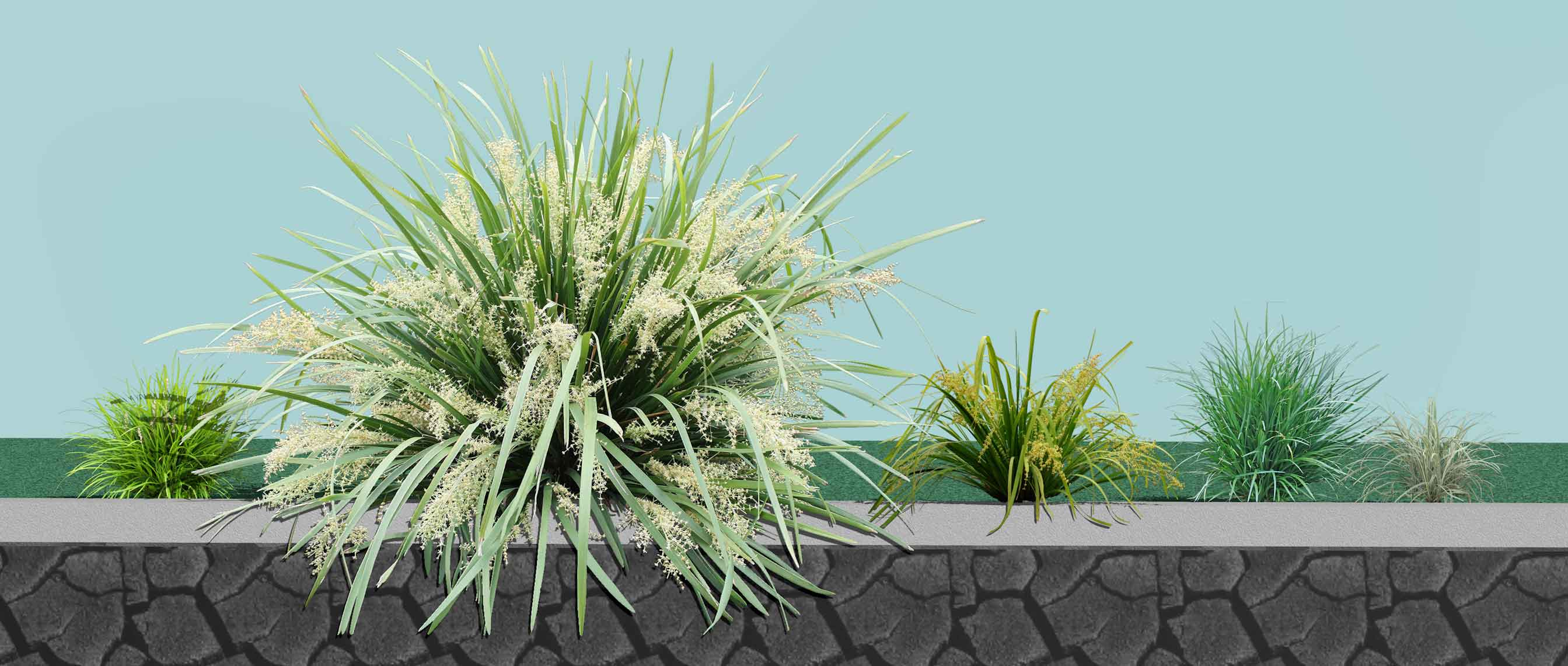 Shade Plants for Victoria Group Plantings
