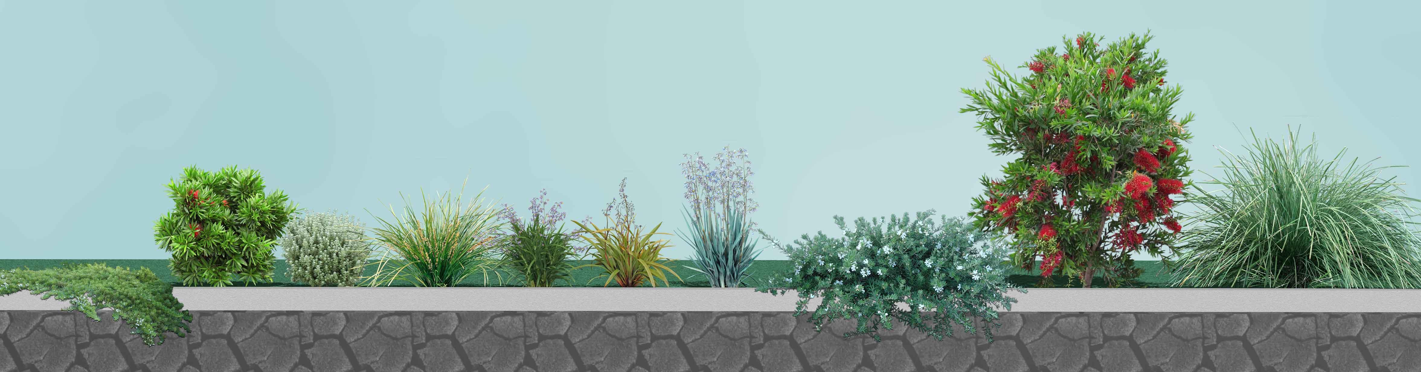 Native Plants for SA Group Plantings