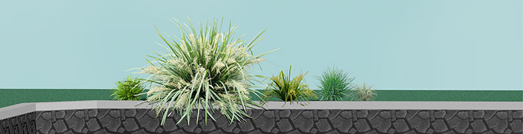 Shade Plants for Western Australia Group Plantings