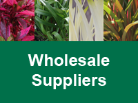 Where to Buy Encore Azaleas - Wholesale