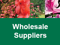 Where to Buy Encore Azaleas - Wholesale