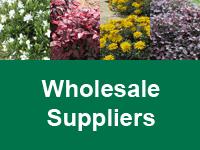 Where to Buy Hardy Exotic Range - Wholesale