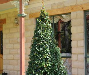 PINNACLE™ Syzygium australe 'AATS' PBR