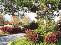 AUTUMN AMETHYST™ Rhododendron hybrid 'CONLEE' PBR