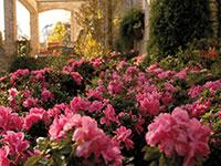 AUTUMN EMPRESS™ Rhododendron hybrid 'CONLES' PBR