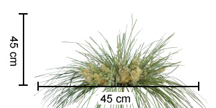 FRILLY LACE™ Lomandra dimensions