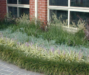 Mondo grass is the most popular garden border plant in Australia