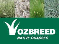 Where to Buy Native Grasses