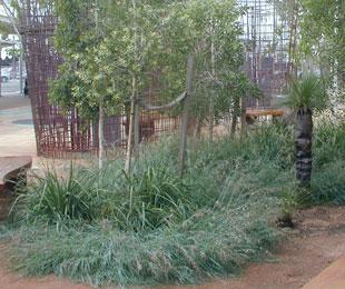 MINGO Themeda australis 'MINGO' PBR