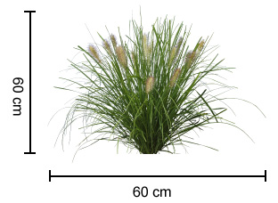 Nafray pennisetum is a compact drought tolerant native grass nafray dimensions workwithnaturefo