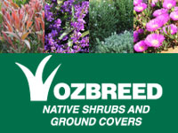 Native Shrubs and Ground Covers