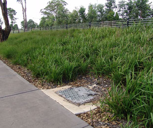 BREEZE® for mass plantings and grassy gardens