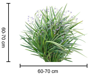 BREEZE® Dianella dimesions