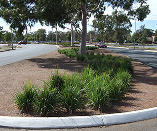 KING ALFRED® Dianella is great for roadsides