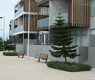 LITTLE REV™ Dianella has a great architectural form