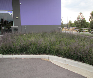 LITTLE REV™ Dianella is perfect for commercial and residential modern landscapes