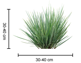 LITTLE REV™ Dianella dimensions