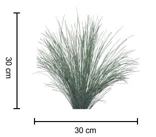 WINGARRA® Lomandra dimensions