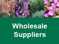 Where to Buy Native Shrubs & Ground Covers - Wholesale