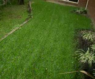 Turf for Shady Yards, Wet Feet and Low Maintenance