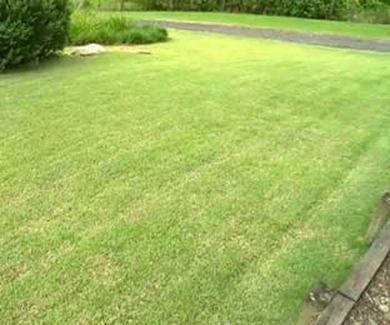 choosing-the-right-lawn