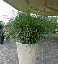 Amazing Whijch Are The Best Plants For Patio Pots   Nyalla