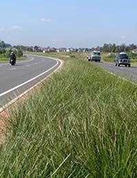tanika_roadside