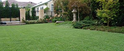 Best Turf For Around Australian Gardens